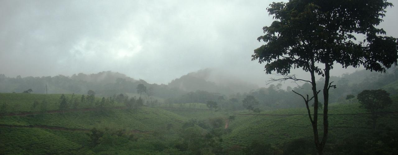 East Usambara Mist